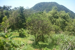land with fruit trees and mountain view