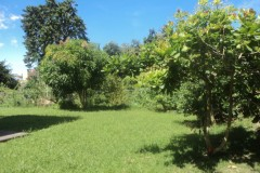 flat land with fruit trees