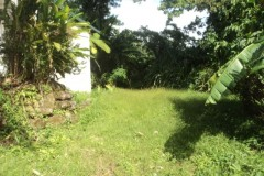 lawn behind house